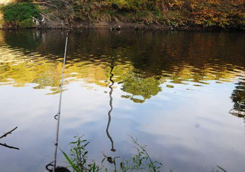 261) <del>Catch a</del> fish in the Don river