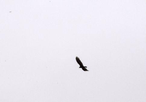 74) Identify a new bird