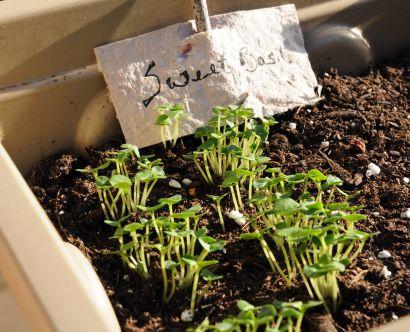 plantHerbGarden_09
