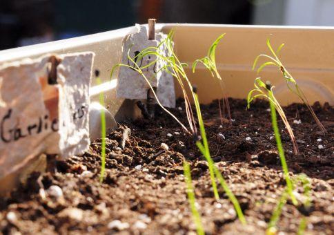 71) Plant an herb garden