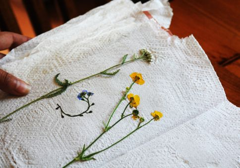 204) Keep a book of pressed-flowers