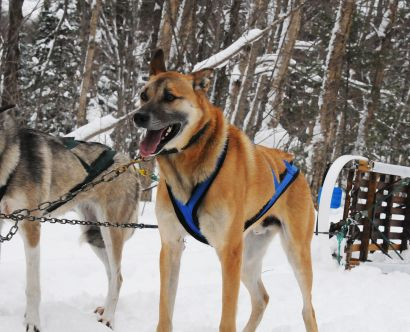 goDogSledding_08