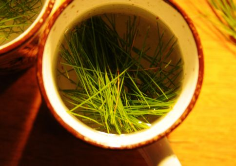 340) Make Pine Needle Tea